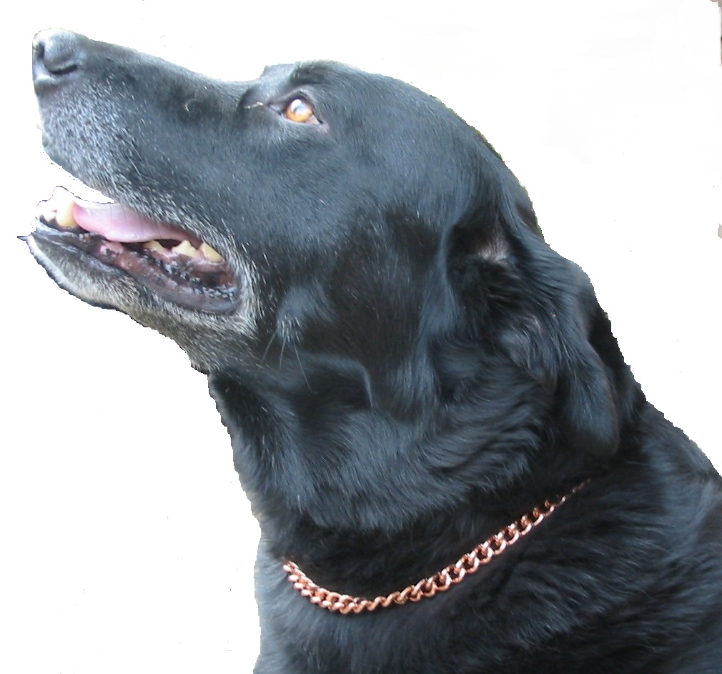 Magnetic And Copper Dog Collar